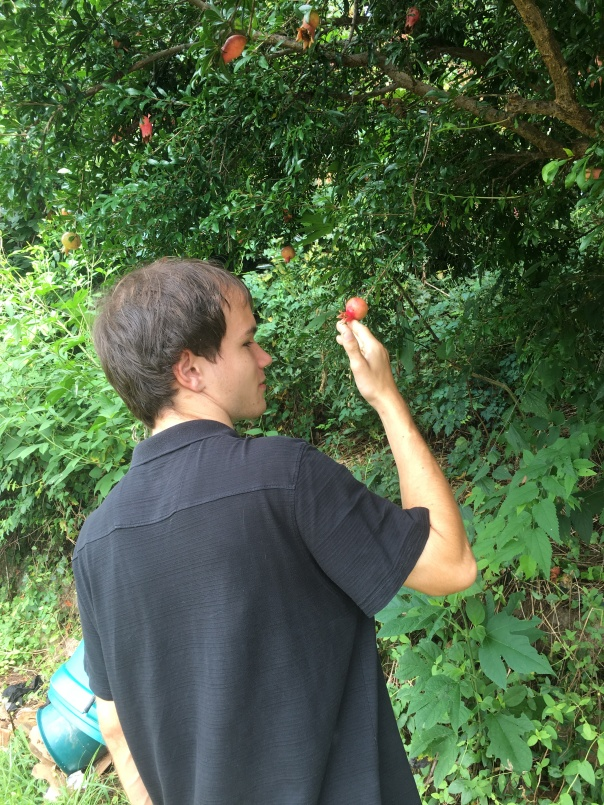 7. Chris found a pomegranate tree!!!
