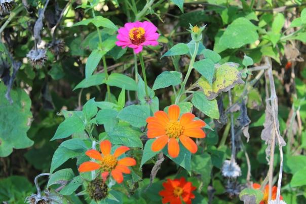 Ben - Wylde Flowers