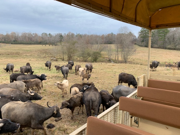ben - safari transport